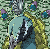 PEACOCK. A Illustration, and Graphic Design project by Marc Valls         - 19.11.2014