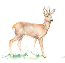 Flora y Fauna para cartel informativo. Ilustración naturaleza.. Um projeto de Ilustração de Lara Barco         - 12.11.2015