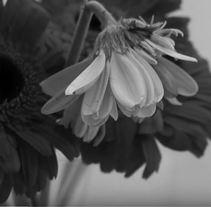 La falsedad de las apariencias | Micrometraje de un argumento universal. A Music, Audio, Photograph, Film, Video, TV, Art Direction, Fine Art, Multimedia, Post-Production, Set Design, Film, and Video project by Nerea Díez Cámara         - 27.01.2017