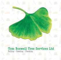 Tom Boswell Tree Services - Diseño web, ilustración, gestión y creación de contenidos.. Um projeto de Ilustração, UI / UX, Design gráfico e Web design de Carlos Páscoa         - 01.11.2016