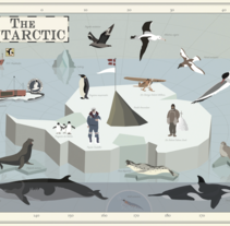 The Antarctic. A Vector illustration project by Pelopantón         - 20.04.2017