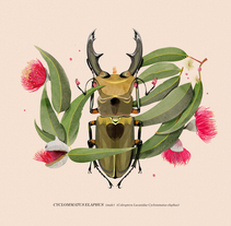 Coleoptera. A Illustration project by Natalia Escaño         - 17.09.2017
