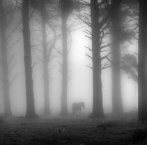 Reportaje caballos en la niebla. A Photograph project by Alex Blanco Asencio - 30-12-2016