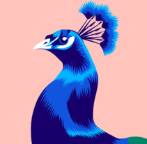 Peacock Vector Illustration. Un proyecto de Ilustración vectorial de Alessandra Stanga         - 12.03.2018